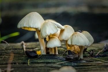 mushroom log 3