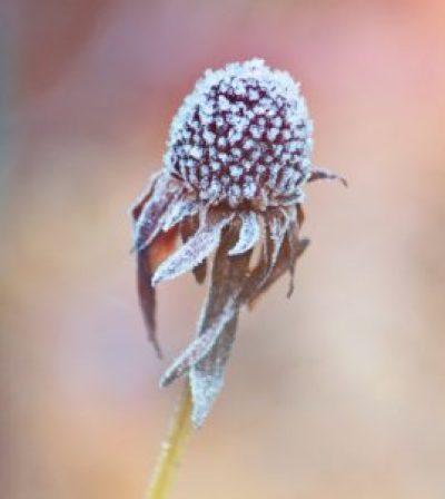 blossom-1069959_1920
