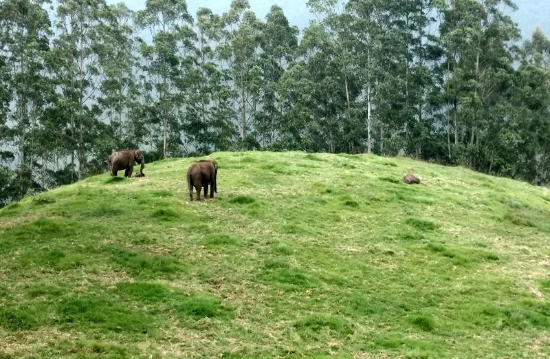 elephant-spot