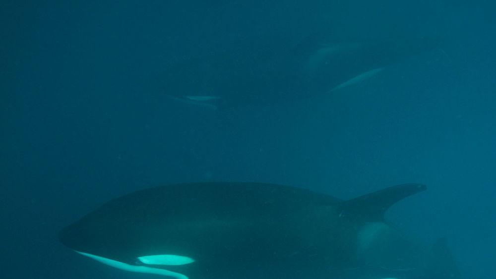 killer whales sri lanka