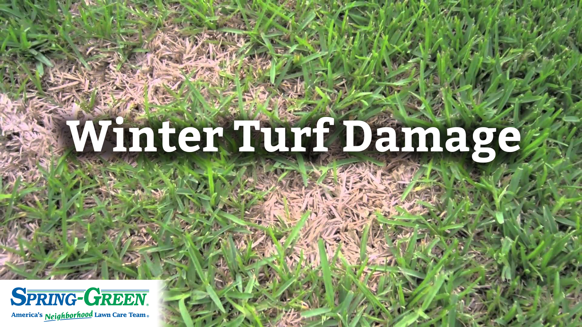 Favorite Good How To Kill Grass Gus Winter Grass Damage Winter Turf How C Temperatures Affected Lawns How To Kill Grass houzz 01 How To Kill Grass