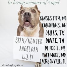 April 2nd we will spay/neuter 400 dogs to honor Angel