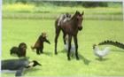 スタホ3 生産演出 動物と戯れる