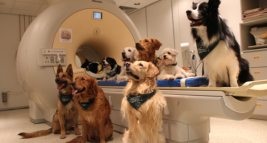 Science Proves Dogs Understand Words the Way Humans Do