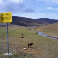 SPECIJALNI REZERVAT PRIRODE UVAC - meandri Uvca i vrh Molitva (15 km)