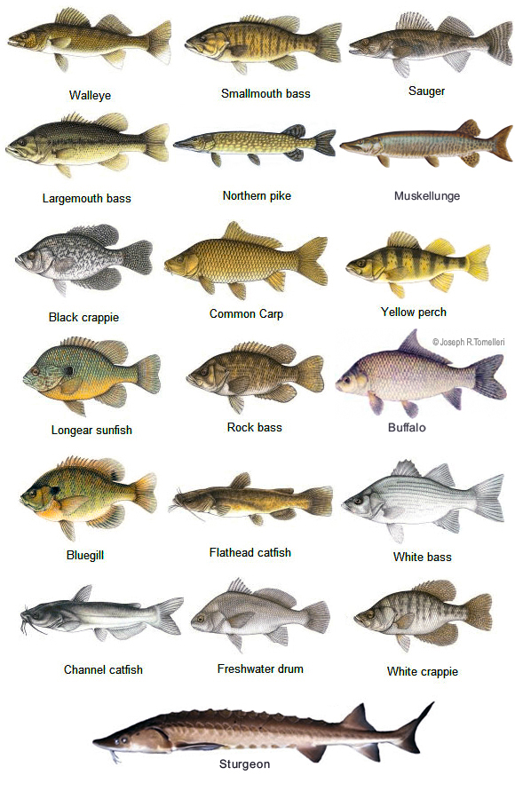 Fishing Camps, Fish Charts, Animal Kingdom, Fish Pictures, Fish Life