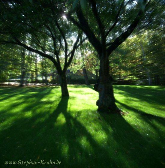 Licht und Schatten im Kurpark