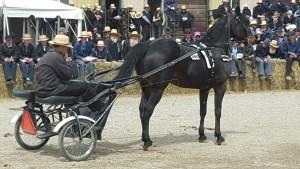 St Jacob's Market horse auction