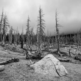 Dead Forest, Horseshoe Lake, Mammoth Lakes, California, 2015