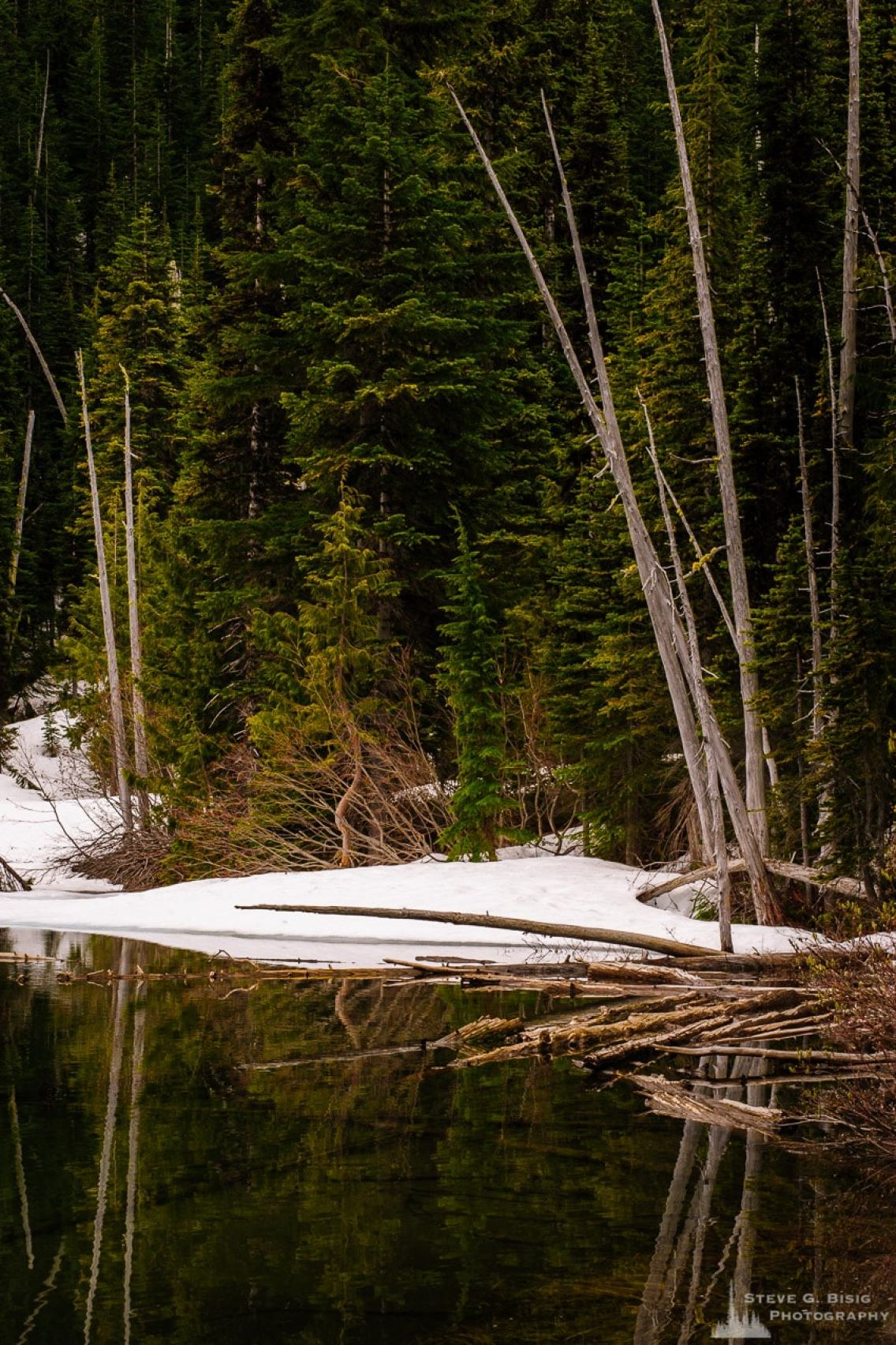 A photograph of the early Spring forest at Crystal Lake in the Mount Rainier National Park, Washington.