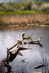 A nature photograph of wetlands along the Lighthouse Point Trail at Deception Pass State Park, Washington.
