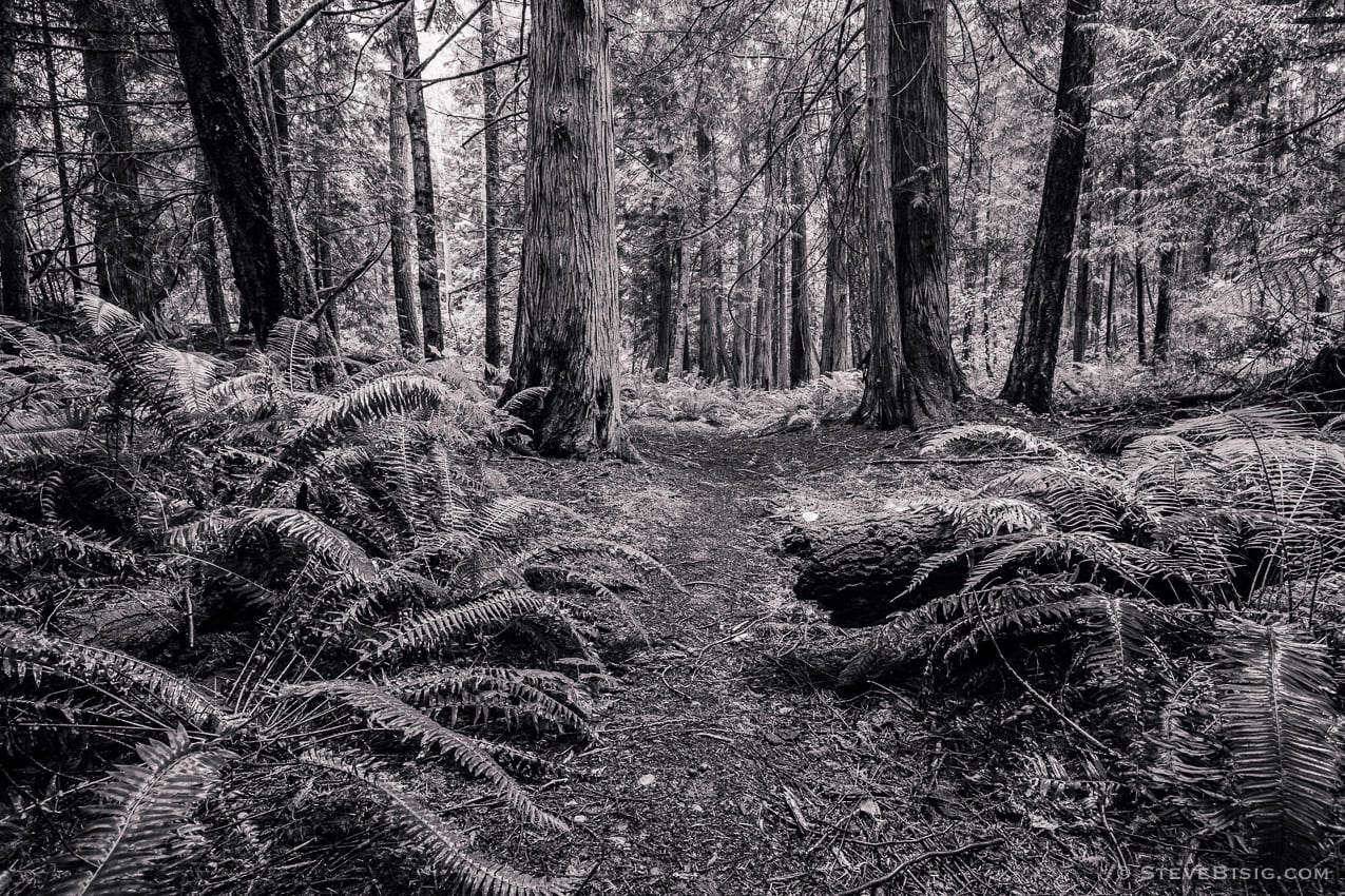 Forest Trail, Fort Townsend State Park, Washington, 2014