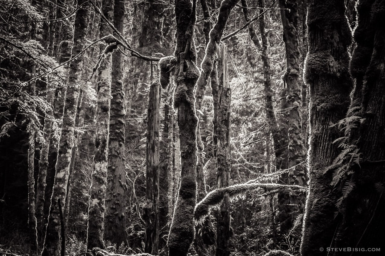 Photography Project: Lowland Winter Forest, Tiger Mountain State Forest, Washington, 2015