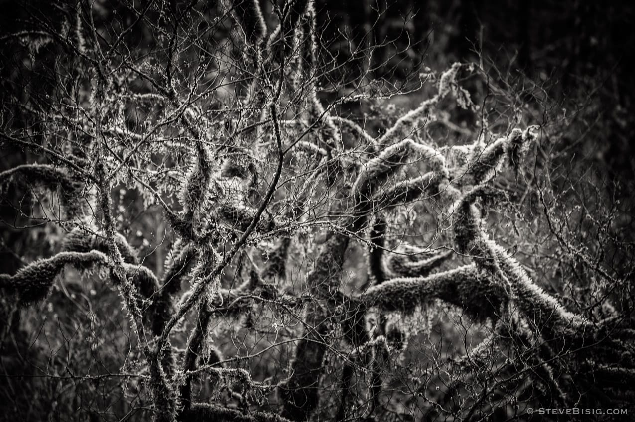 Lowland Winter Forest No. 10, Tiger Mountain, Washington, 2015
