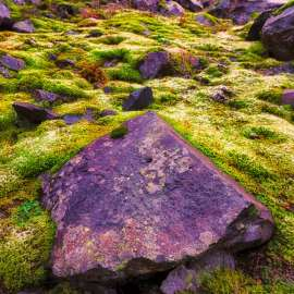Rock and Moss Garden, Snoqualmie Pass, Washington, 2011