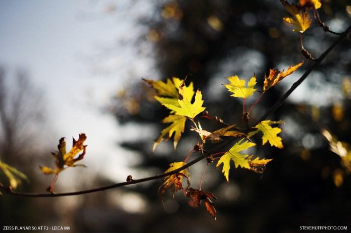 leavesf23