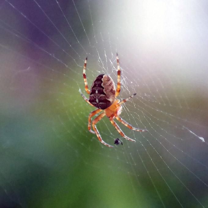 Spider Macro 18-55mm