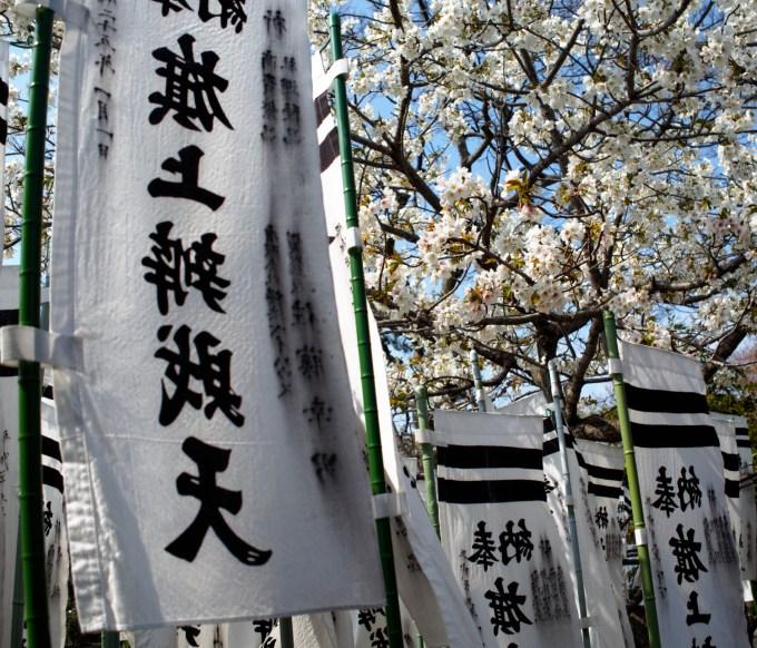 Spring flowers, Kamakura, Japan