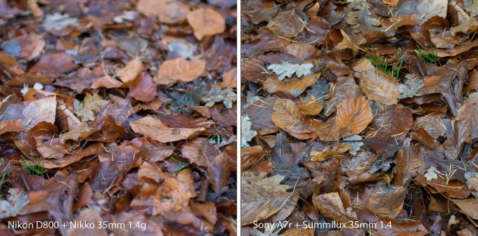 Leaves comparison