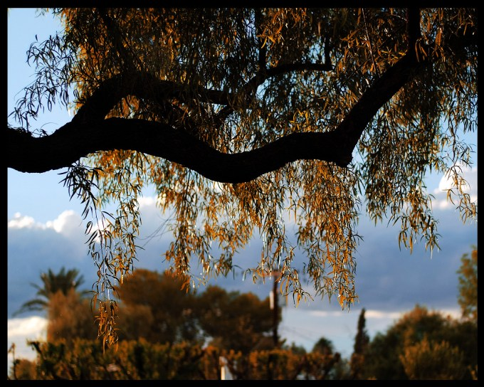 treeglow