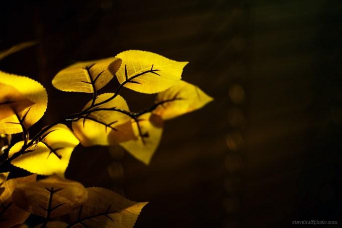 leavescolorlight