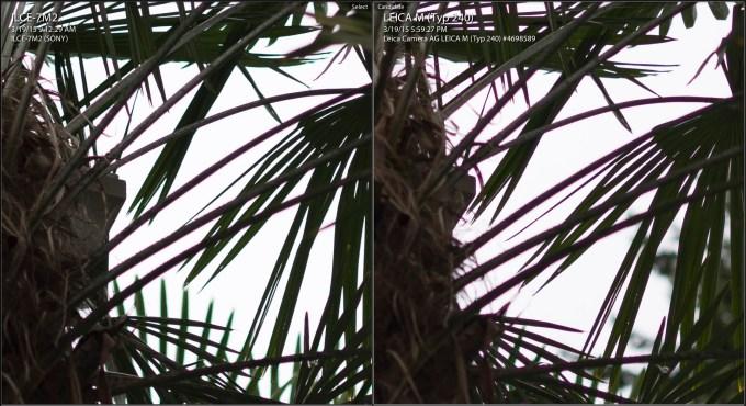 sony-m240 palm