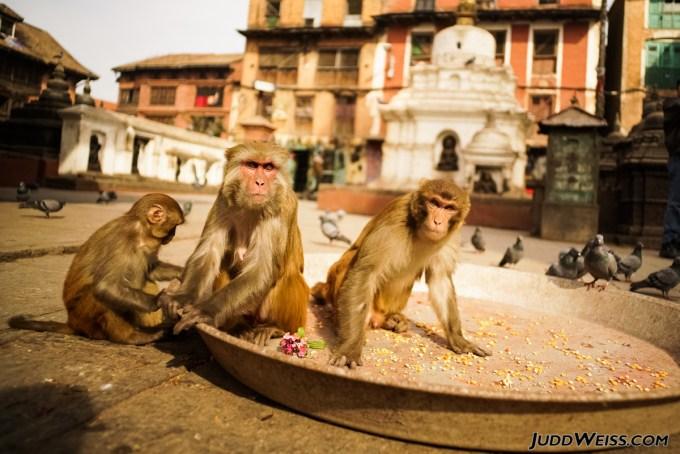 nepal-2015-1017