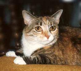 cat guest