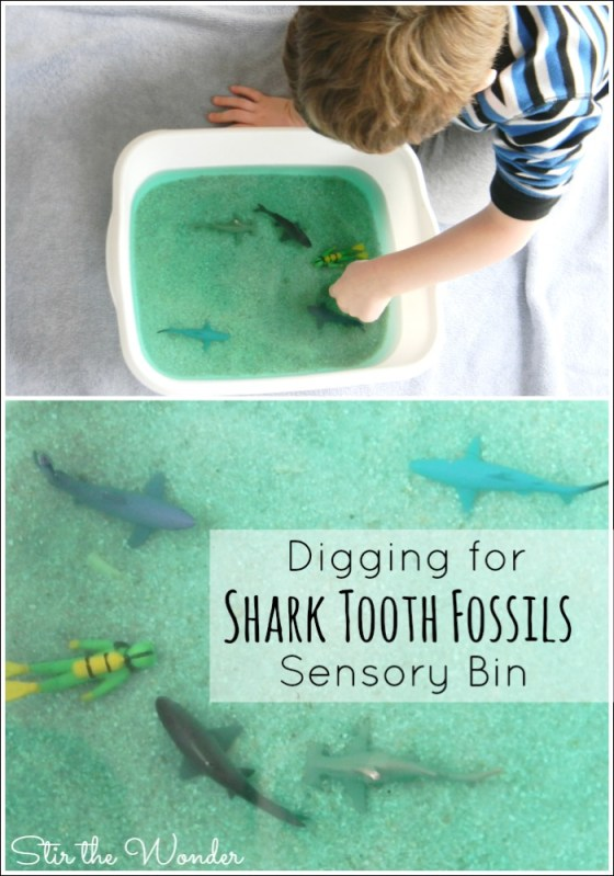 Digging for Shark Tooth Fossils is a fun, hands-on way to learn about sharks and shark teeth!