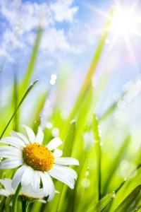 Wonderful-Spring-Flowers-3