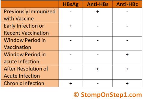 Hepatitis Serology Window Period Surface antigen core antigen antibody