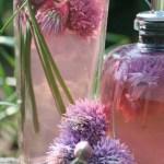 Chive Blossom Vinegar Tutorial