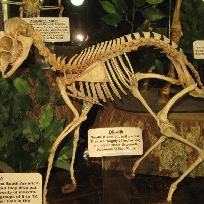 Skeletal Structures