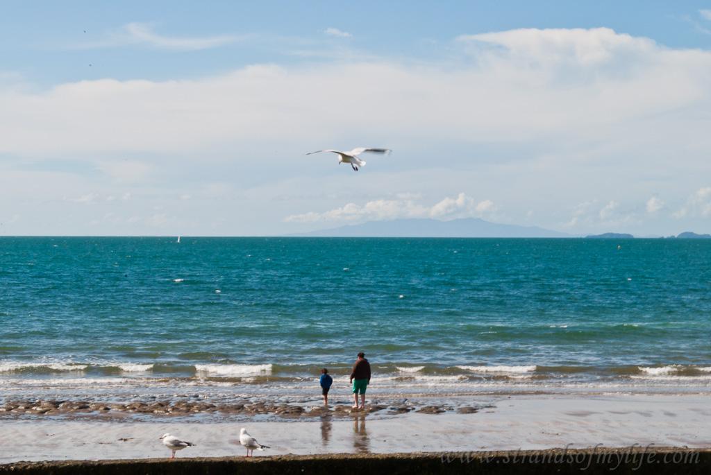 Mairangi Bay beach