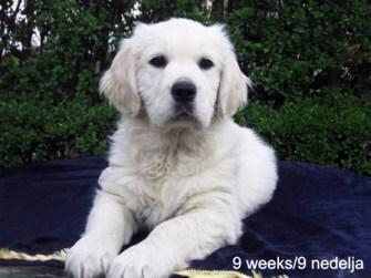 Dolly 9 weeks