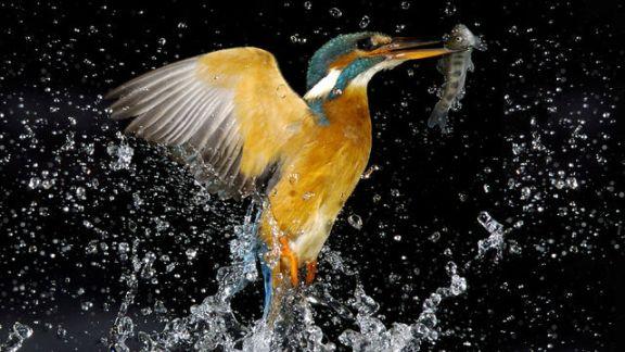 Slow Mo Bird