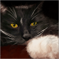 "lazlo, ""meditations on a paw,"" hand-painted protrait by shelli - gallery thumbnail image"