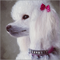 pearl, the poodle-goat, hand-painted digital portrait by shelli
