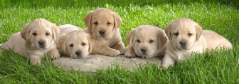 dog-wallpaper-collection-small