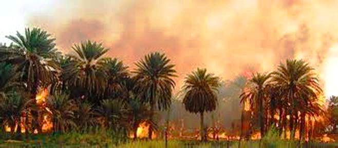 حريق هائل يقضي على أكثر من 150 نخلة في عبري