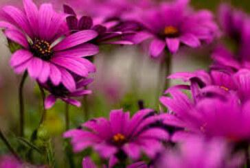 سوق عالمي ينتج 86 مليار دولار الزهور ونباتات الزينة .. إمكانات اقتصادية مجهولة