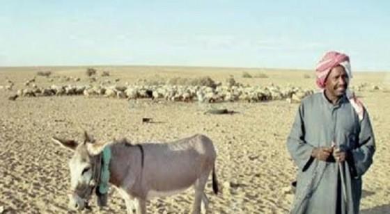 ثراء مفاجئ يدفع راعياً سودانياً لشراء أغنام كفيله