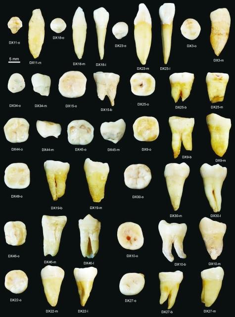 أسنان في كهف صيني تعيد كتابة تاريخ هجرة الإنسان الأول