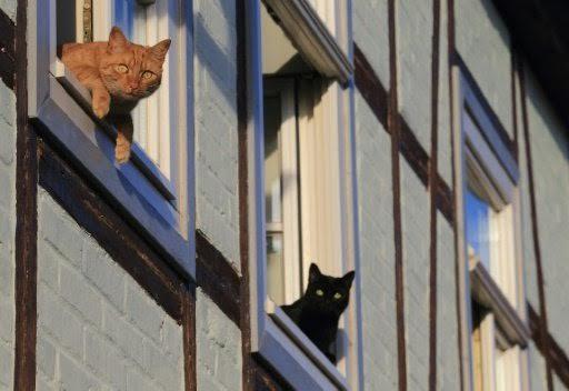 بالصور .. ما علاقة الإرهاب بصور القطط التي اجتاحت مواقع التواصل البلجيكية