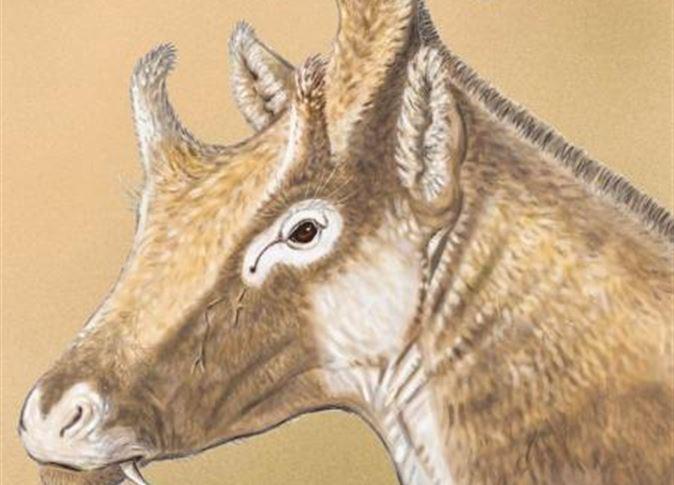 اكتشاف كائن غريب من عصور ما قبل التاريخ
