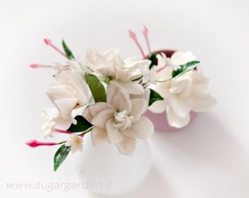Gardenia e Gelsomino