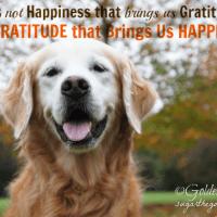 Thankful and Gratitude