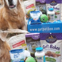 Yummy & FUN | October PetBox