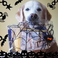 Do You Give Your Pets Halloween Treats?