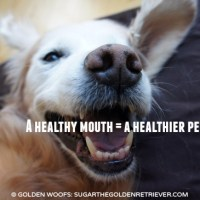 3 Types Of Dog Dental Health Products #SmoochUrPooch